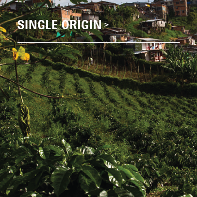 Fairtrade Organic - Colombian Excelso - Single Origin