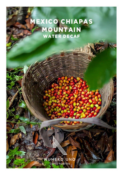 Mexico Chiapas Mountain Water - Decaffeinated Coffee