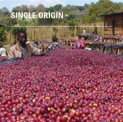 Ethiopian Lekempti - Single Origin - Black Friday