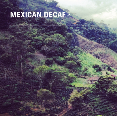 Organic Mexican Mountain Water Decaf