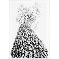 Growing Tall Framed Print
