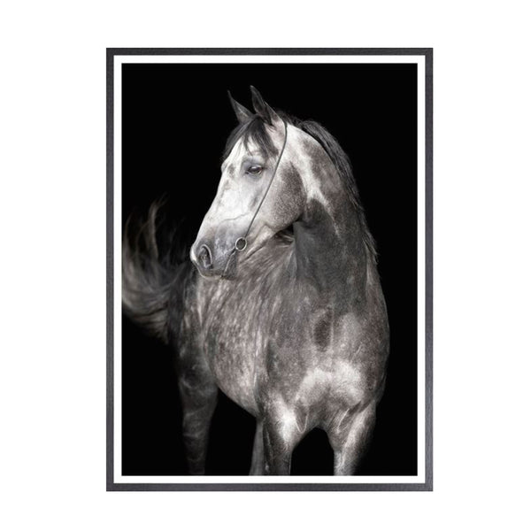 Grey Stallion Framed Print