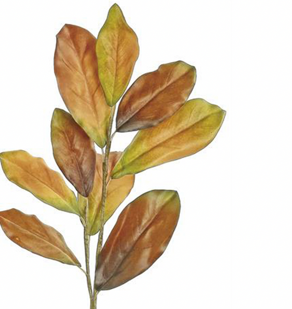 Autumn Magnolia Leaf Spray