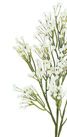 Gypsophila Spray Bush