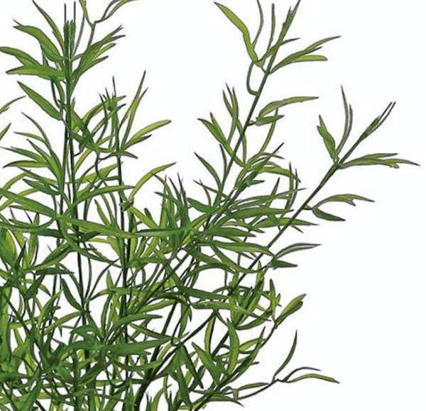 Faux Tarragon Leaf Bush