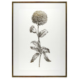 Single Flower II Framed Print