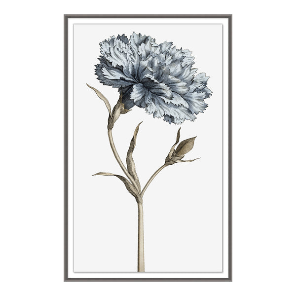 Carnation I Framed Print