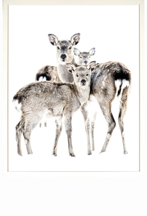 Deer Family Framed Print