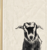 Black Ink Goat Framed Print