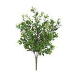 Mini Boxwood Bush