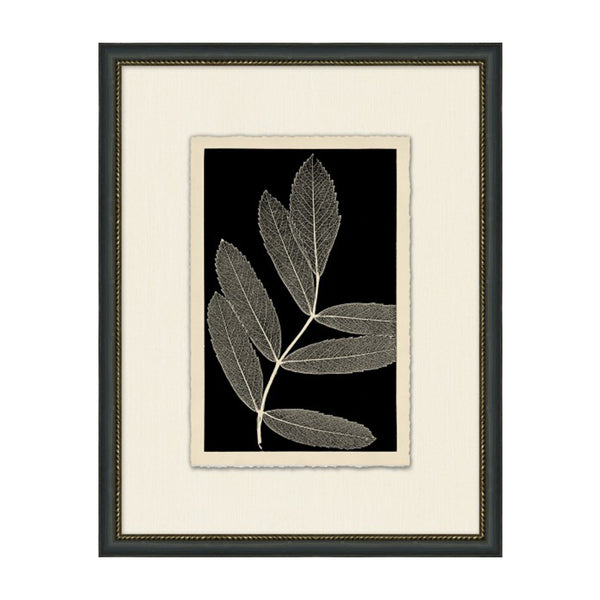 Nature's Simplicity Framed Print