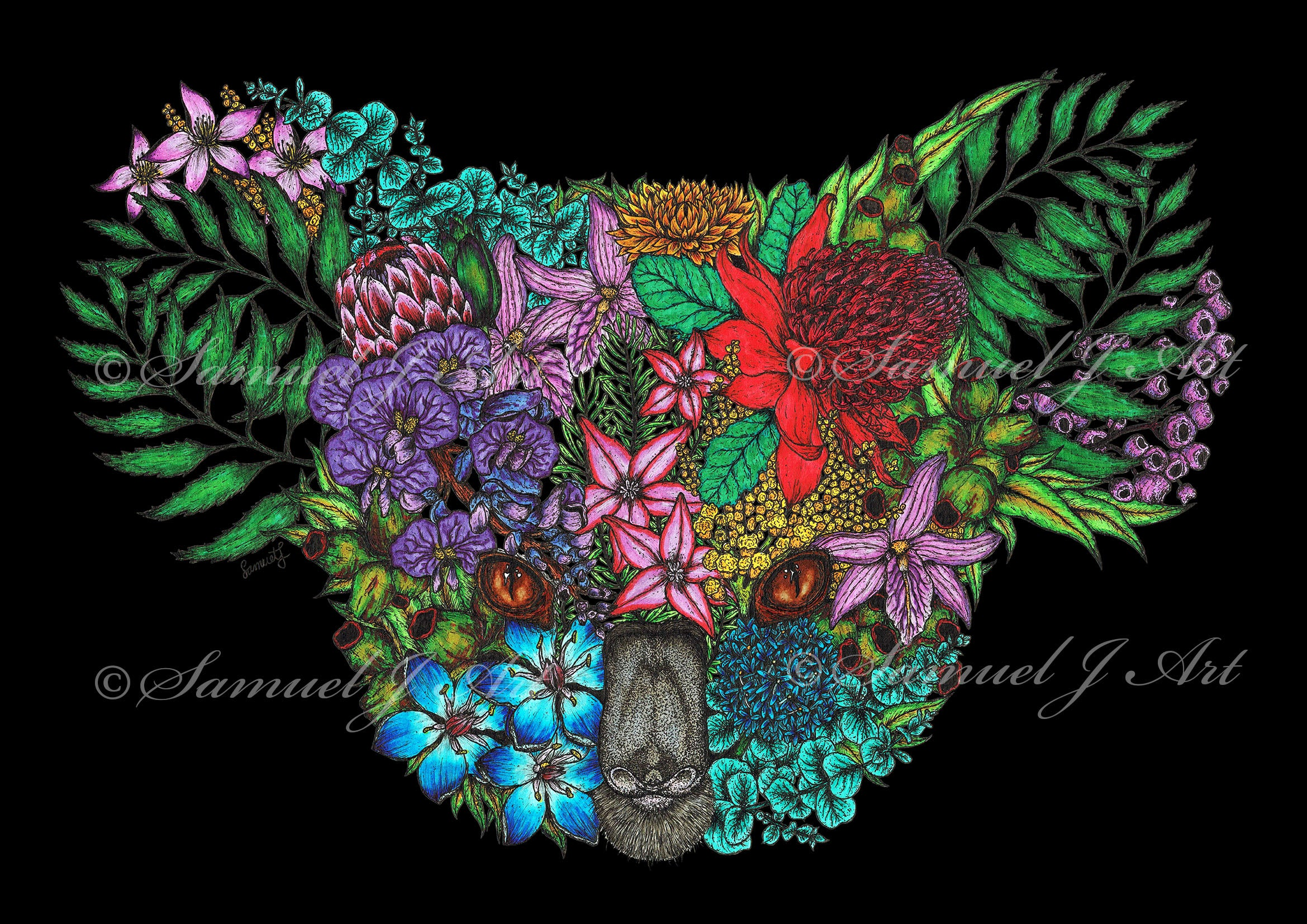 Colour Floral Koala - Black Background - Prints