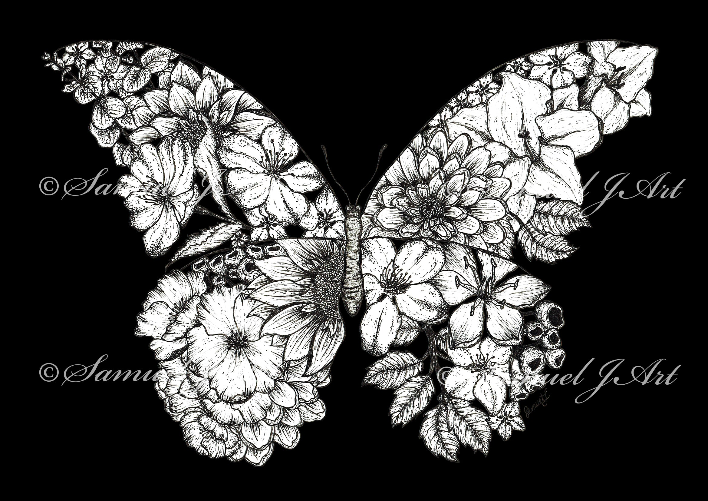 Floral Butterfly - B &W - Black Background