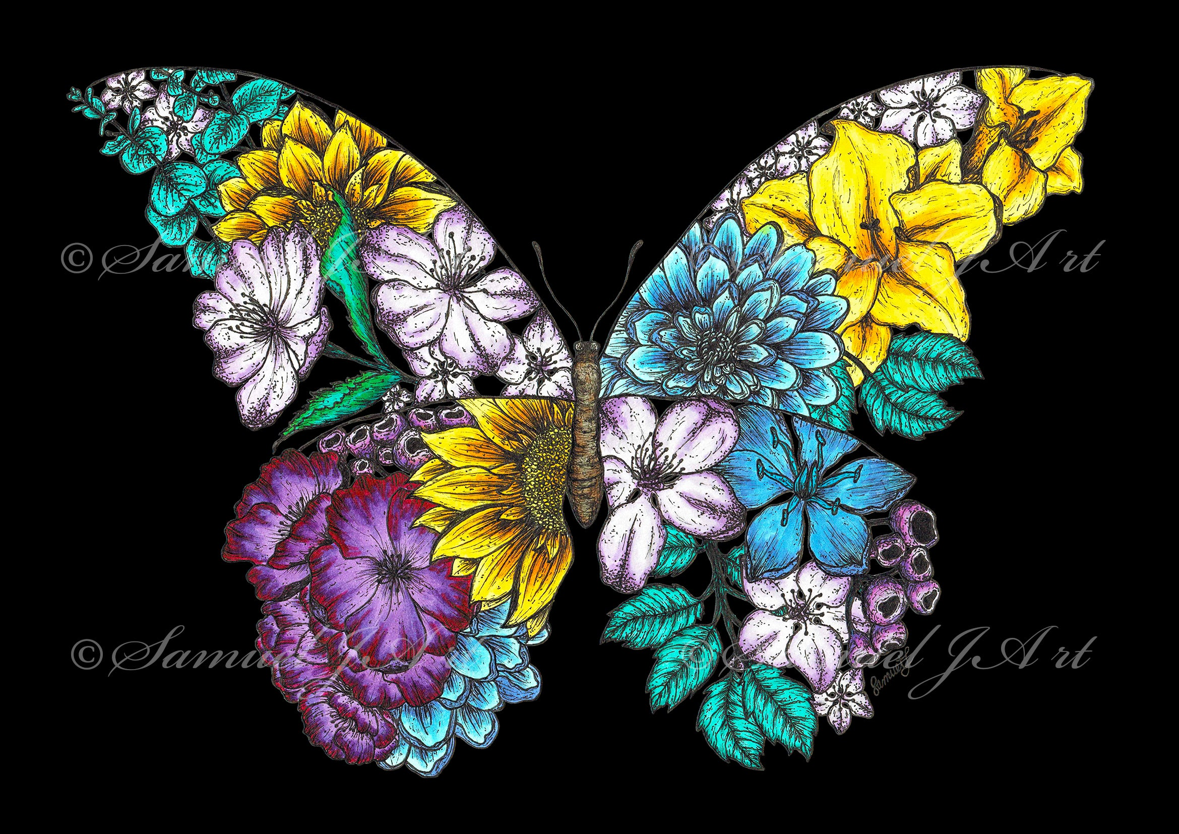 Floral Butterfly - Colour - Black Background