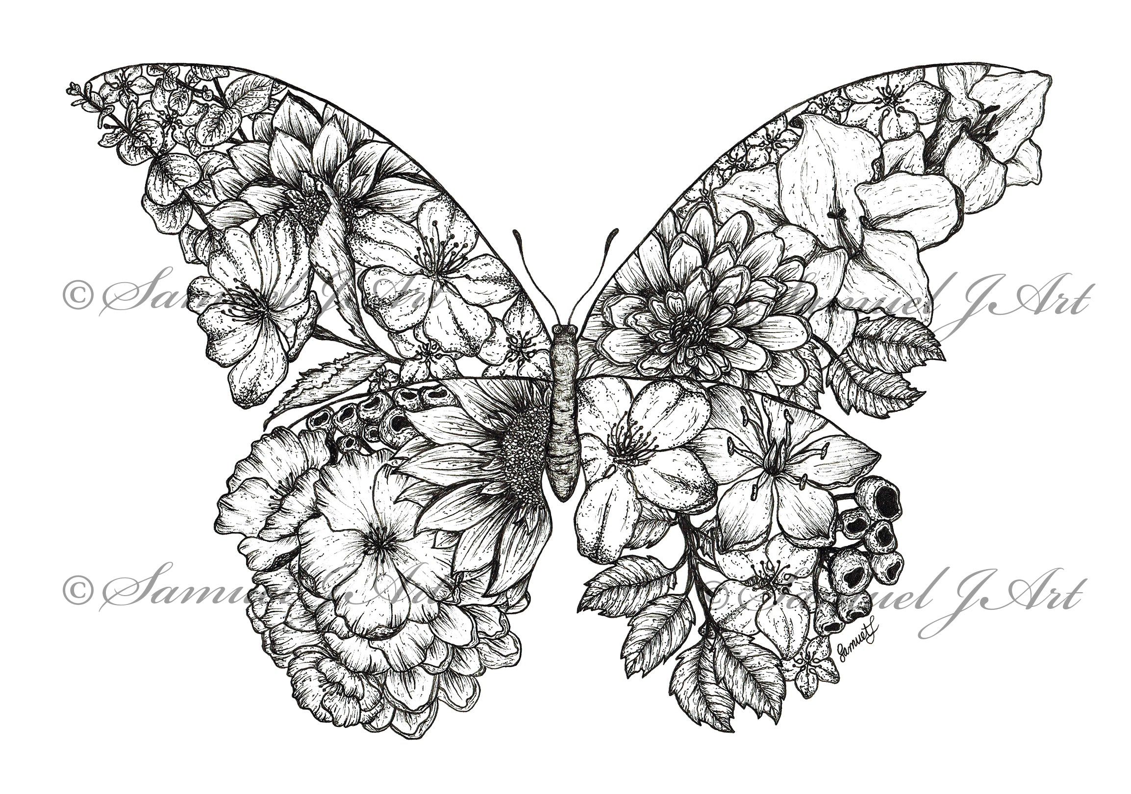 Floral Butterfly - B&W - White Background
