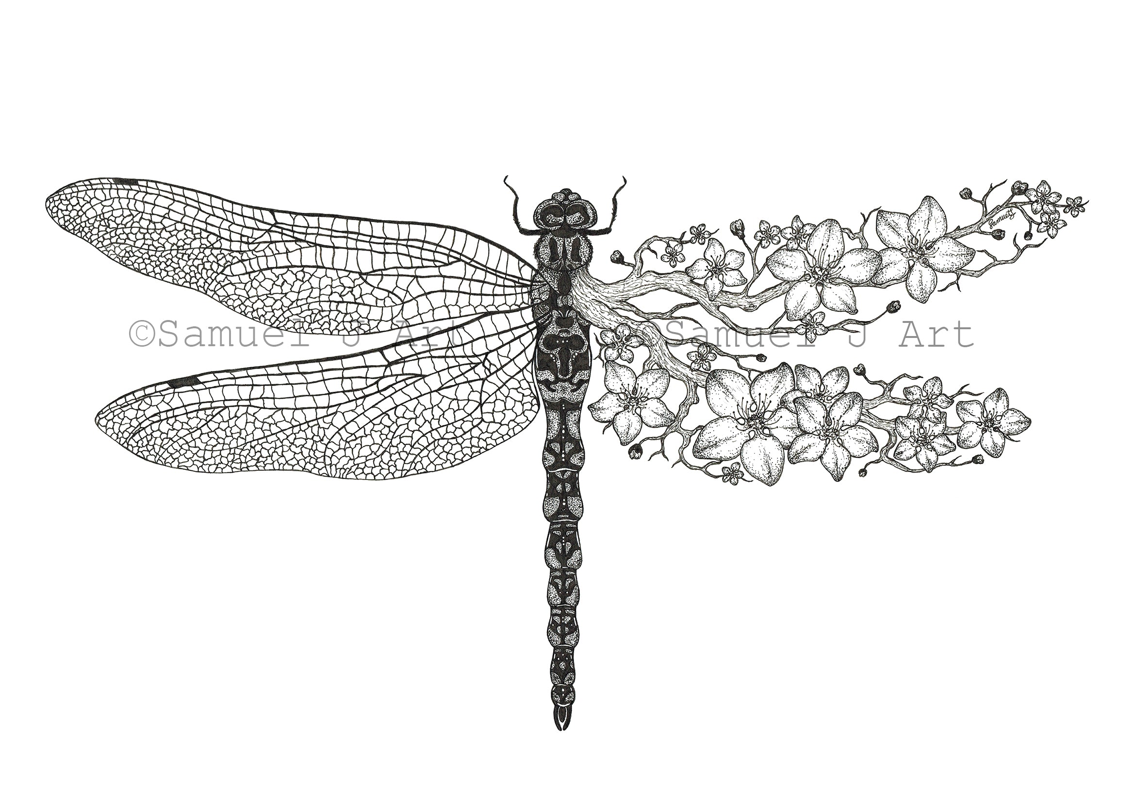 Floral Dragonfly - Prints