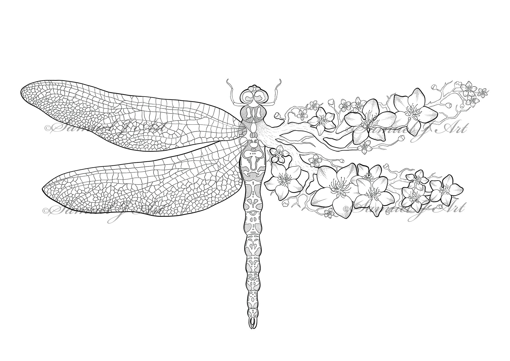 Floral Dragonfly - Colouring Template - Digital Download
