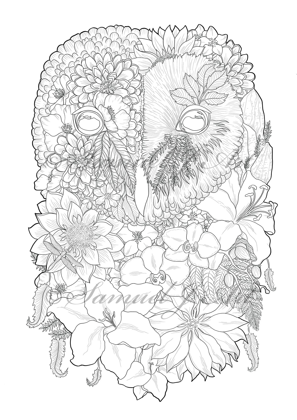 Floral Owl - Colouring Template - Digital Download