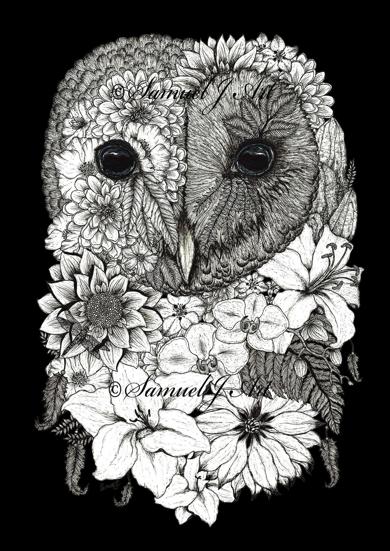 Floral Owl - Black Background - Prints