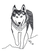 Black and white drawing graphic of Siberian Husky by Wendy Christine