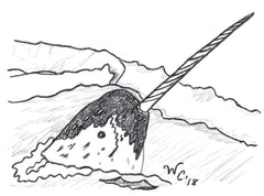 Black and white graphic of narwhal poking out of ice with nine-foot tusk by Wendy Christine