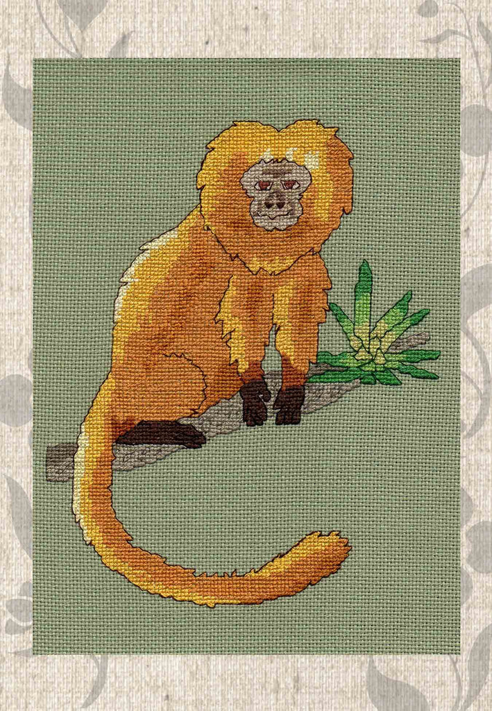 Buy Golden Marmoset Cross Stitch Pattern.  Tropical Wonders Cross Stitches at Raspberry Lane Crafts