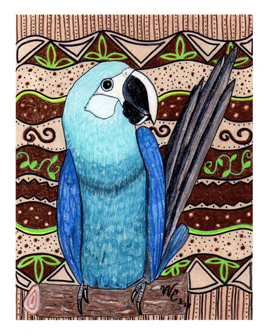 """Spix's Macaw"" Signed Print"
