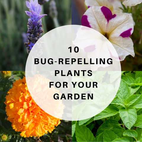 10 Bug Repelling Plants For Your Garden Vickie Sorensen S Nature