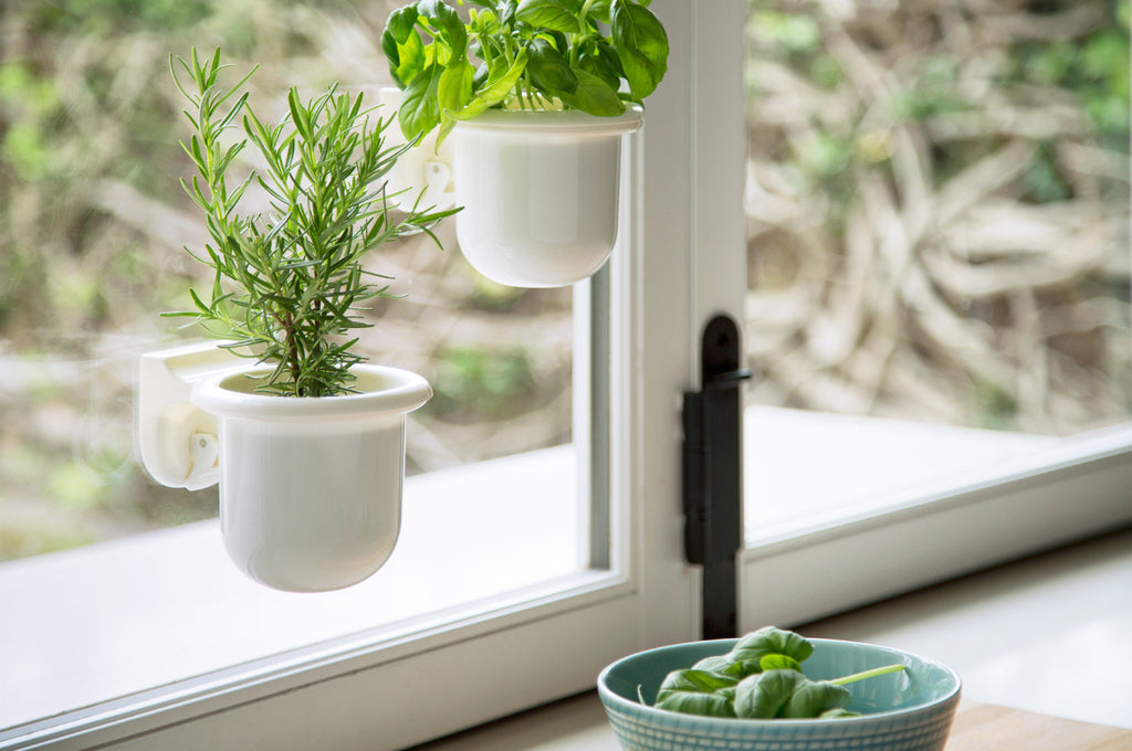 catchall holder removable cup suction plants decor window