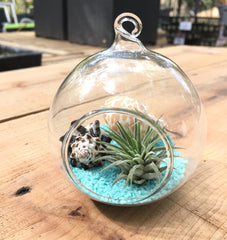 Terrariums & Supply