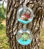 "3"" Hanging Terrarium With Double Hooks"