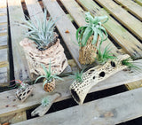 Cholla Wood Display Pieces - 5 sizes available