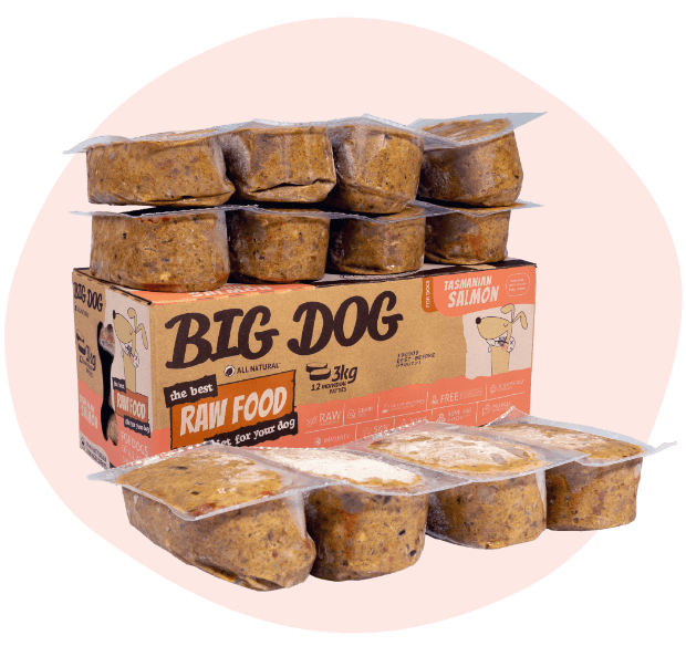 BIG DOG Tasmanian Salmon Raw Food (frozen)