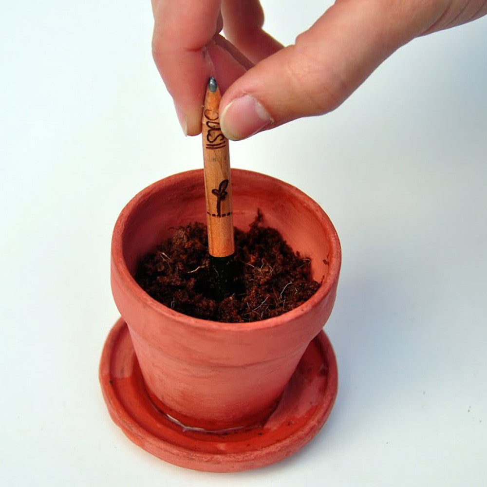 Eco Pencil To Plant After Using
