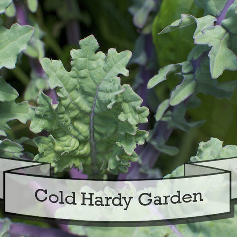 Cold Hardy Garden Seed Gift Set
