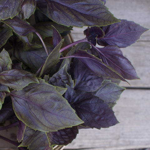 Dark Purple Basil Seeds