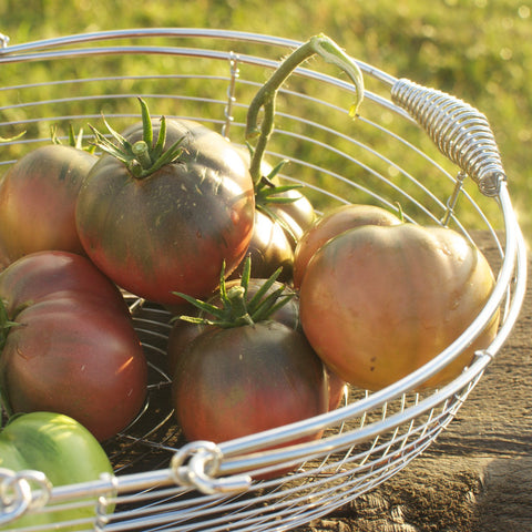 Southern Night Tomato Seeds