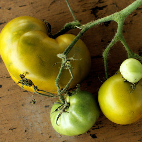 Lime Salad Green Tomato Seeds