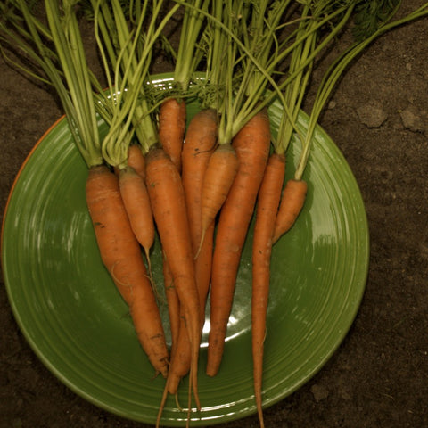 Scarlet Nantes Orange Carrot Seeds