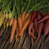 Colourful Carrot Mix