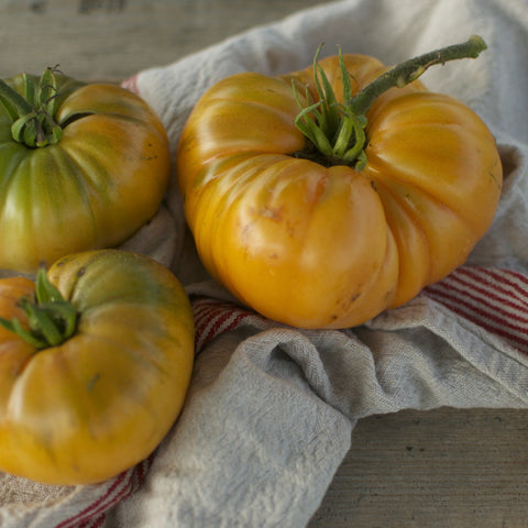 Summer Cider Tomato Seeds