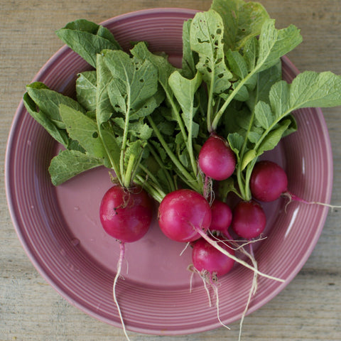 Pink Beauty Radish Seeds