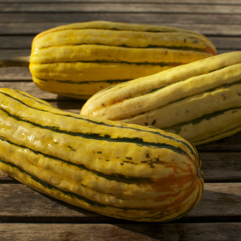 Delicata Winter Squash Seeds