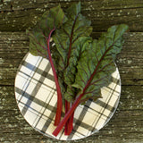 Rhubarb Red Swiss Chard Seeds