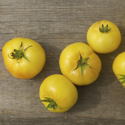 Blanche du Quebec Heirloom Tomato Seeds