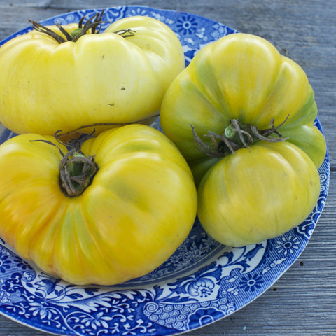 Pork Chop Tomato Seeds