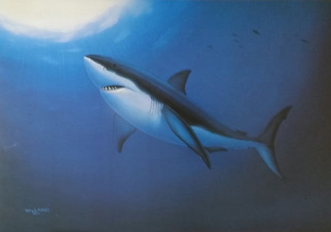 Wyland Great White Fine Art Lithograph Print Artist Hand Signed and Numbered