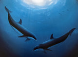 Innocent Age Dolphin Serenity Wyland Lithograph Print Artist Hand Signed and Numbered