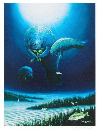 Wyland Manatee Visit Fine Art Lithograph Print Artist Hand Signed and Numbered