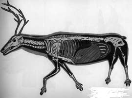 The Skeletoned Caribou